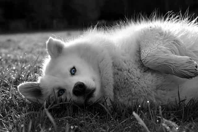 tratamiento hipo perros