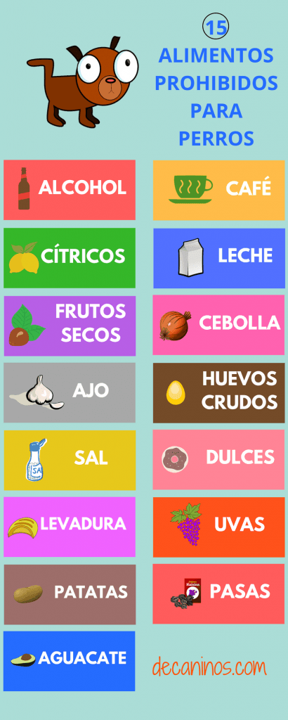 15 alimentos prohibidos para perros en decaninos.com