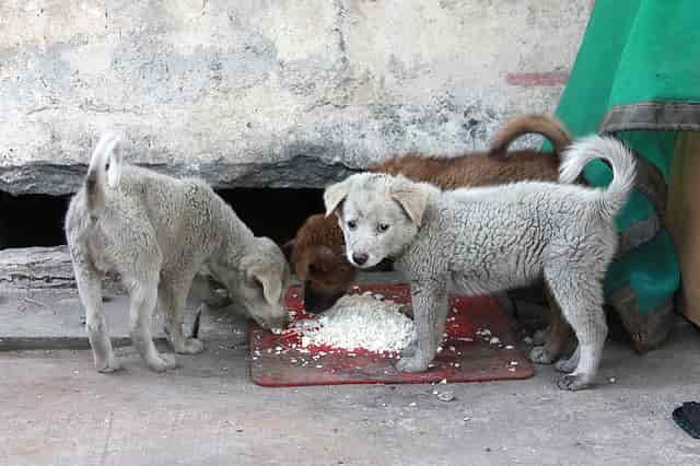 castrar a un perro evita cria incontrolada
