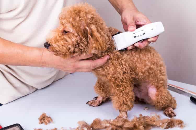 mejor máquina cortapelo para perros