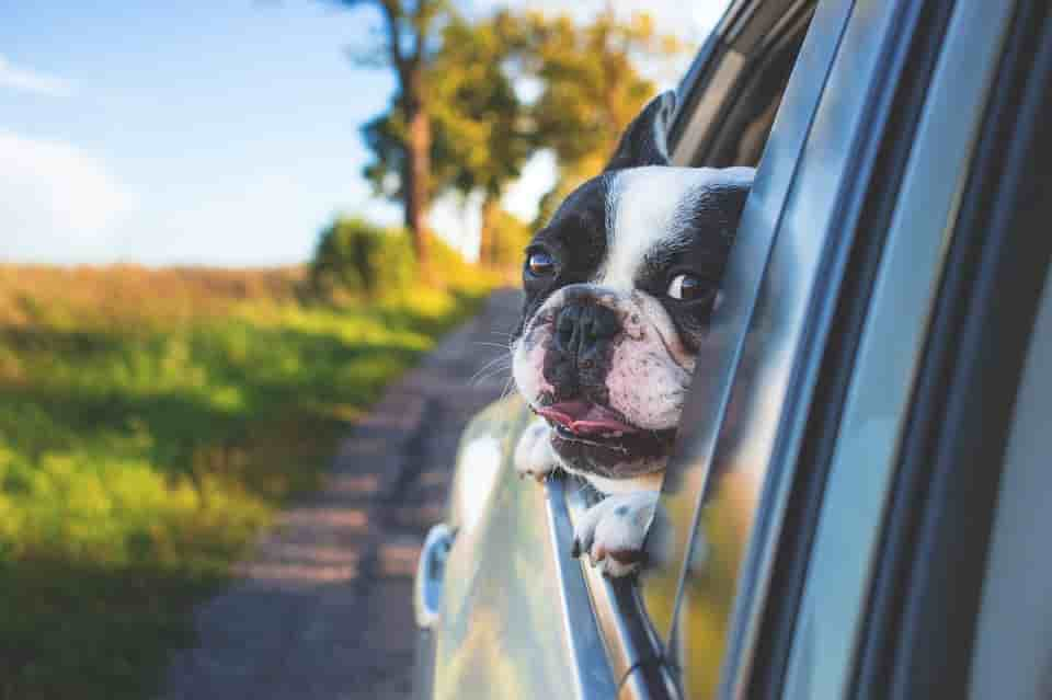 Por que viajar con niños y perros