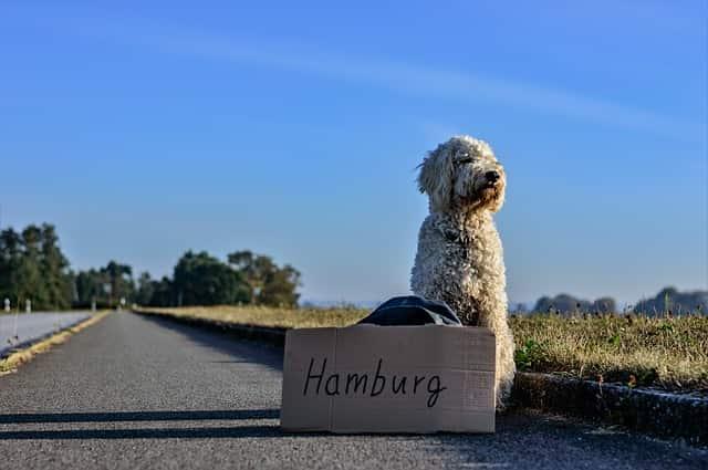 Viajar con perro por Europa