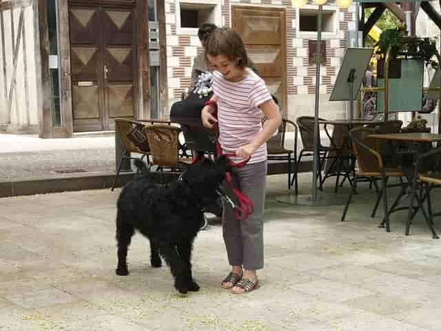 cómo viajar con niños y perro