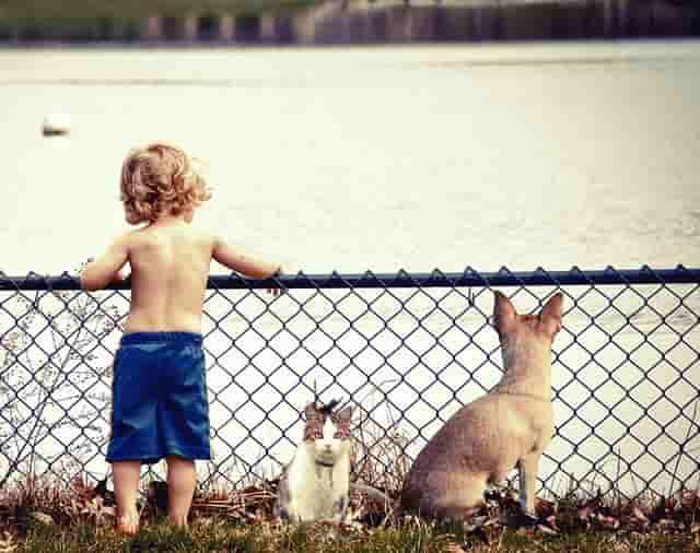 viajar con un bebé y un perro