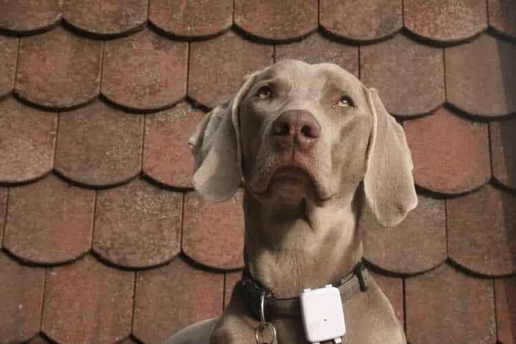 gps para perros opiniones