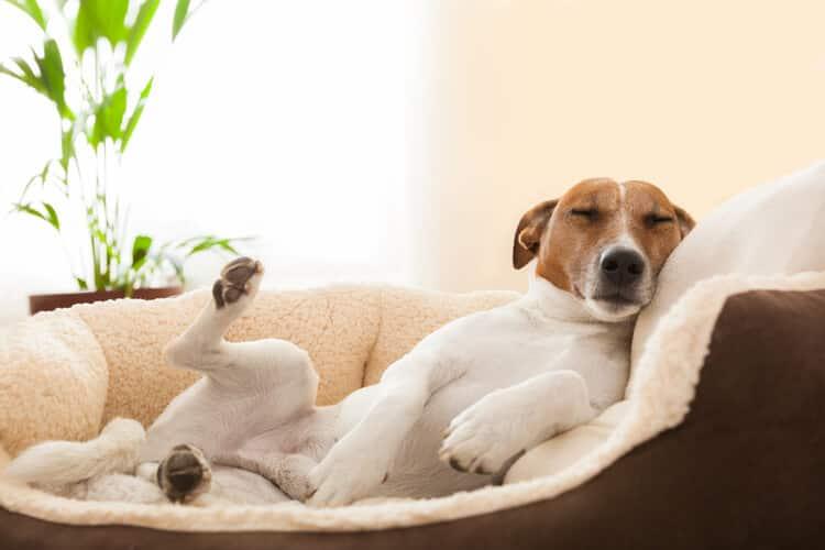 mejores camas para perros
