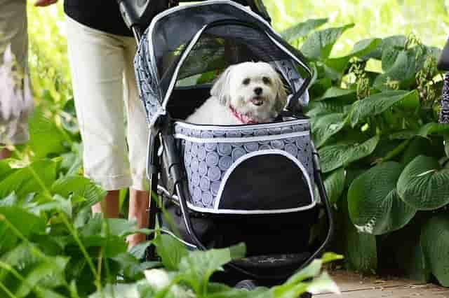 Carros para perros los 5 mejores cochecitos y carritos for Carritos para perros