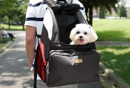mochila para cargar perro