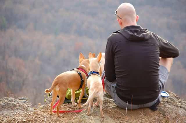 mochilas-para-perro-pequeño-en-montaña