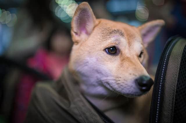 mochilas para perros baratas