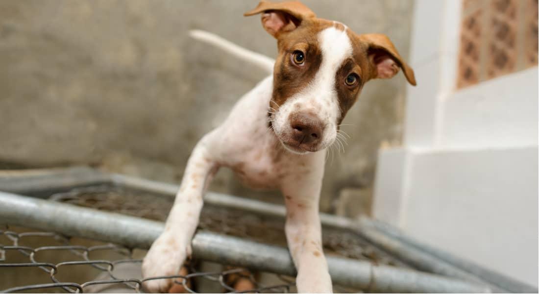 cómo adoptar un perro gratis