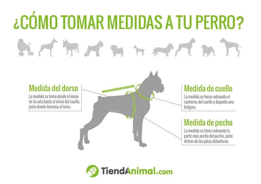 Dónde Comprar Casas Para Perros Baratas Las Mejores Para