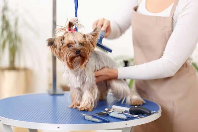 comprar mesa cortar pelo para perro