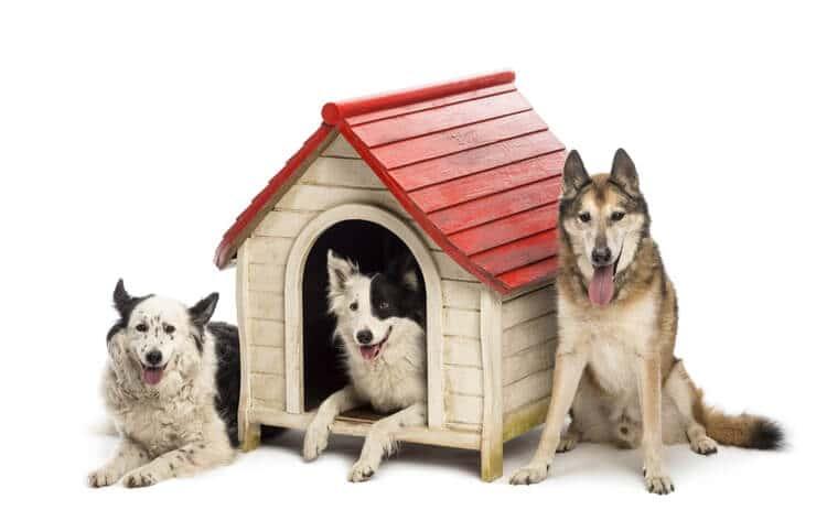 dónde comprar casas para perros baratas