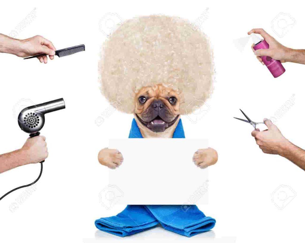 peluquería productos perros