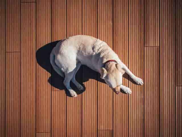 Dónde comprar casas para perros baratas. Las 5 mejores casetas 2018