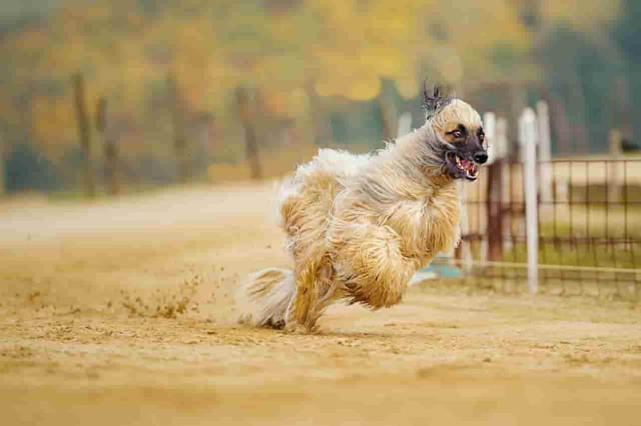 mejores condroprotectores para perros