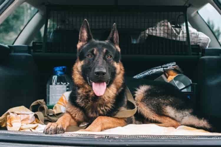 rejillas separadoras para perros coche