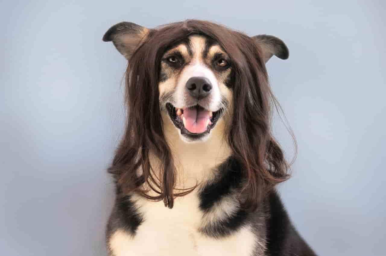 cual es el mejor cepillo para perros
