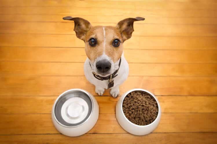 mejor pienso para perros diabéticos barato