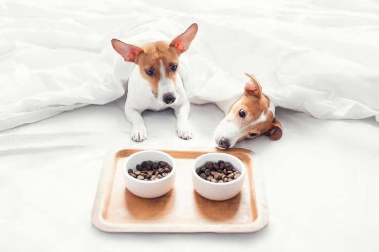 mejor pienso para perros sin cereales