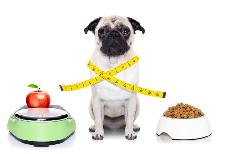 mejores piensos para perros esterilizados
