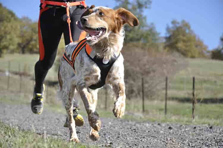 correa para correr con el perro