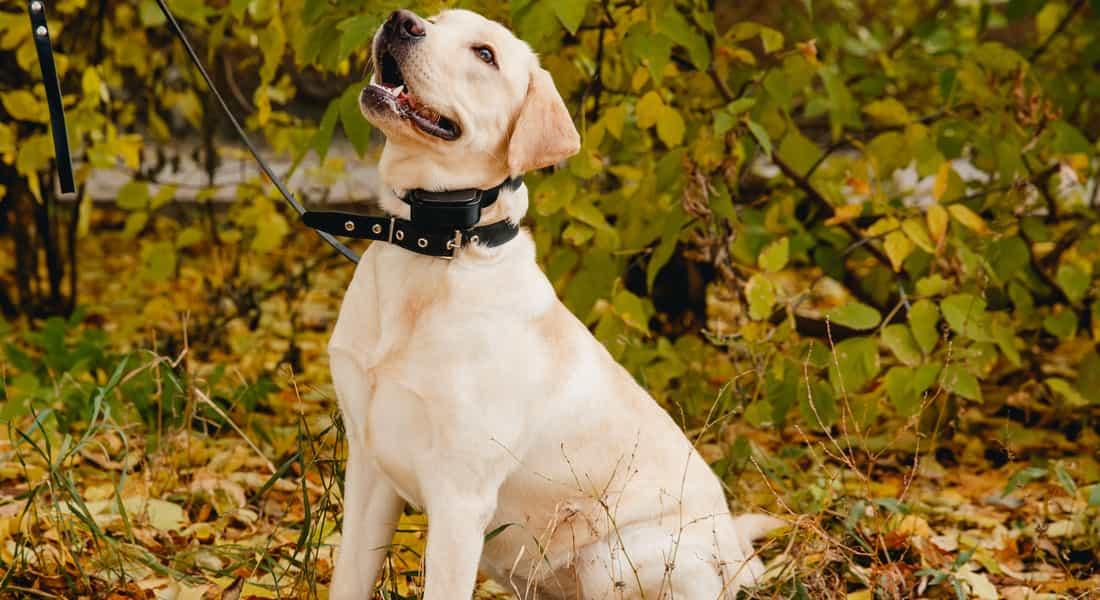 collares eléctricos para perros opiniones