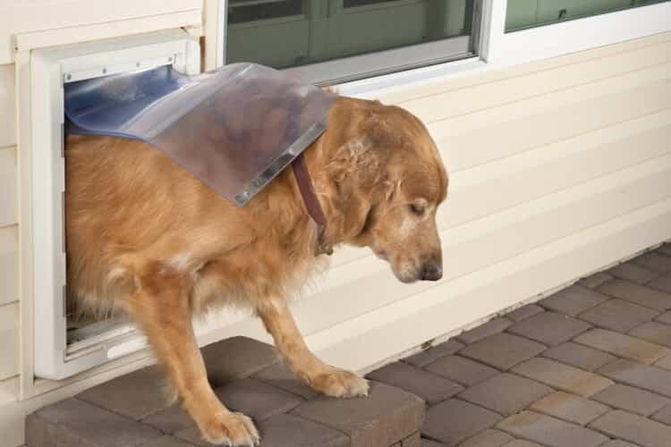 donde comprar puertas para perros