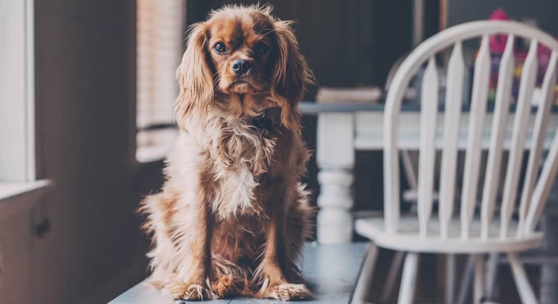 mejor mesa de peluquería canina