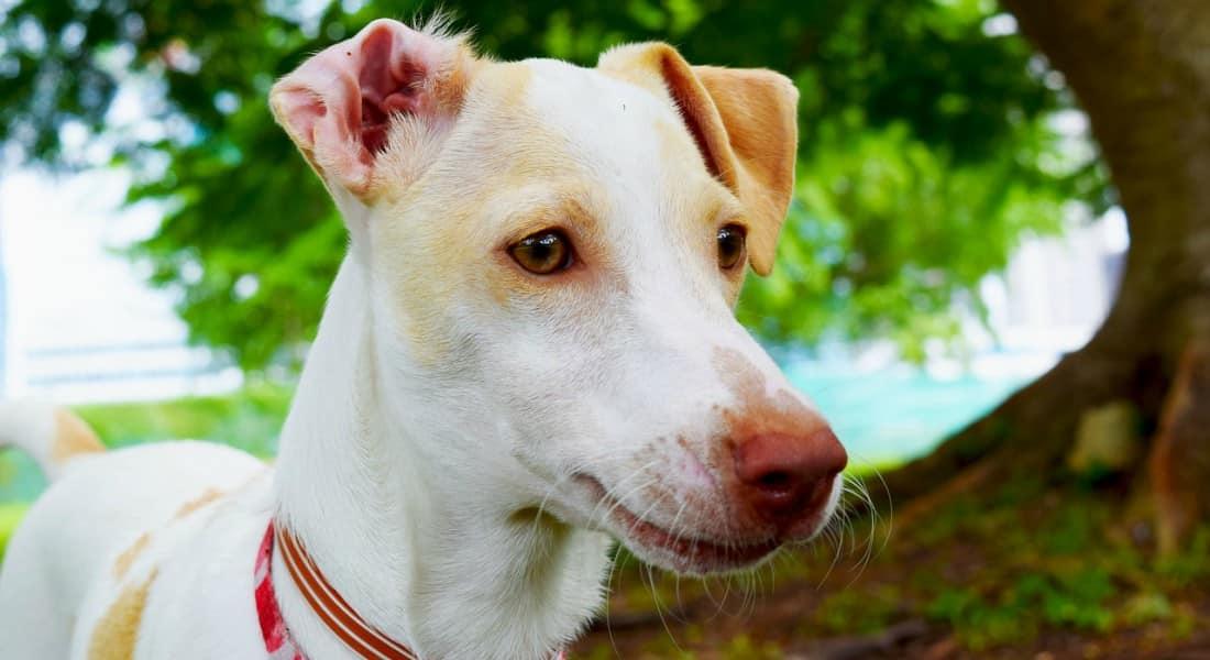 mejor collar antiparasitario para perros