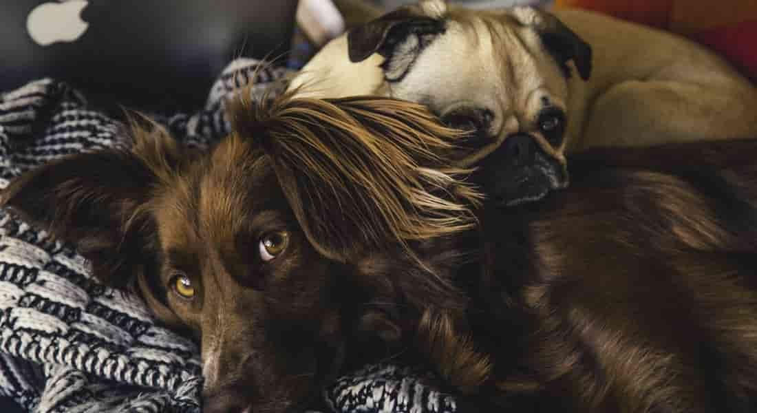 beneficios camas ortopedicas viscoelaticas de perros