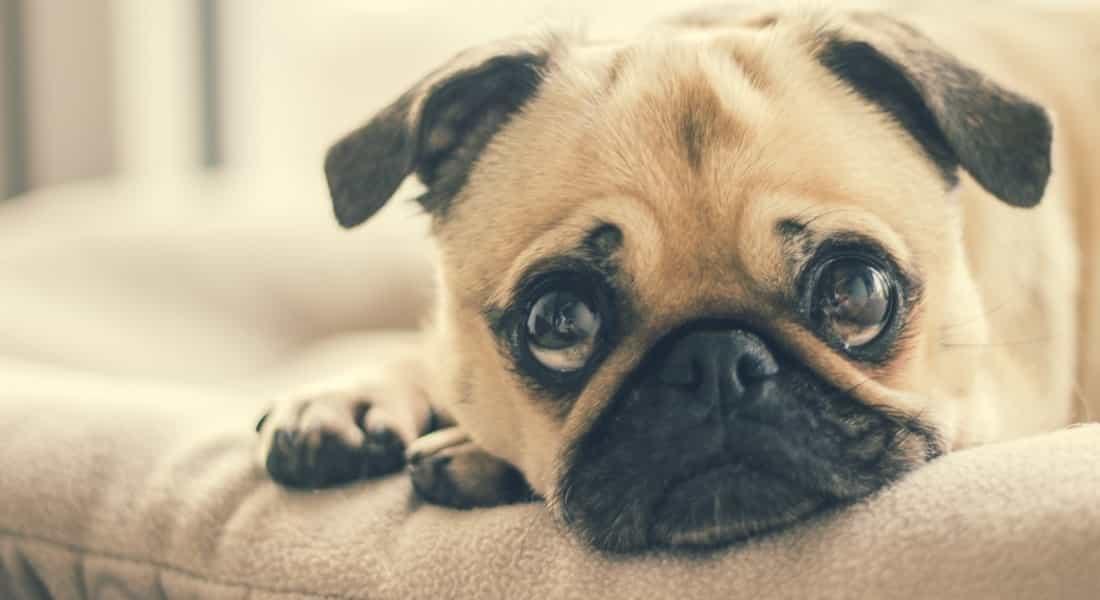 cama ortopedica cuidado espalda perros