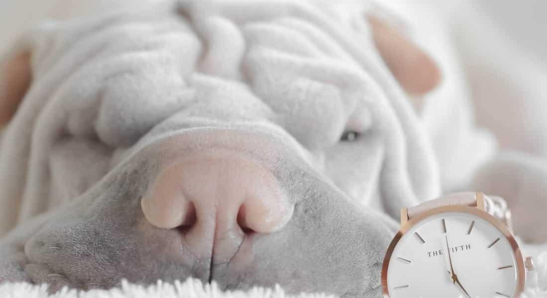 camas ortopedicas para perros artrosis