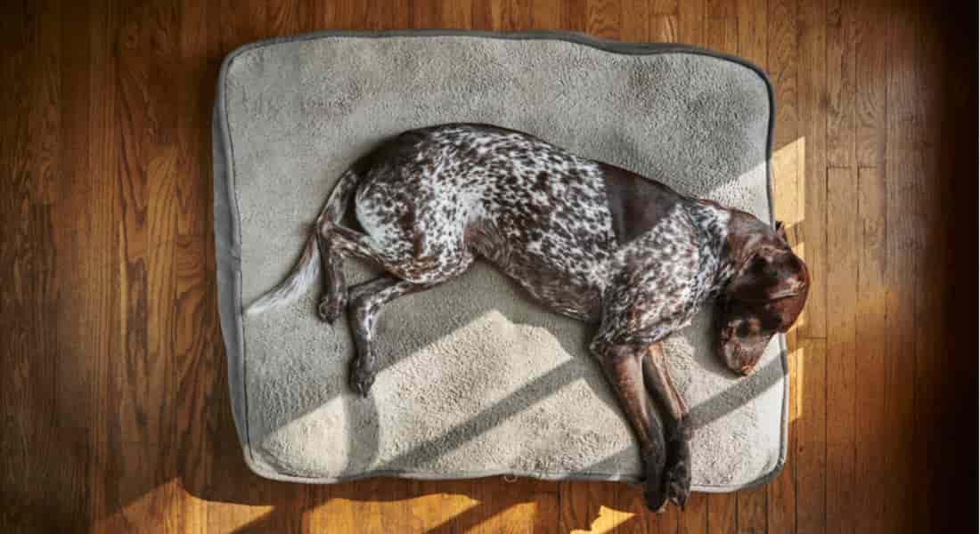 camas ortopedicas para perros baratas
