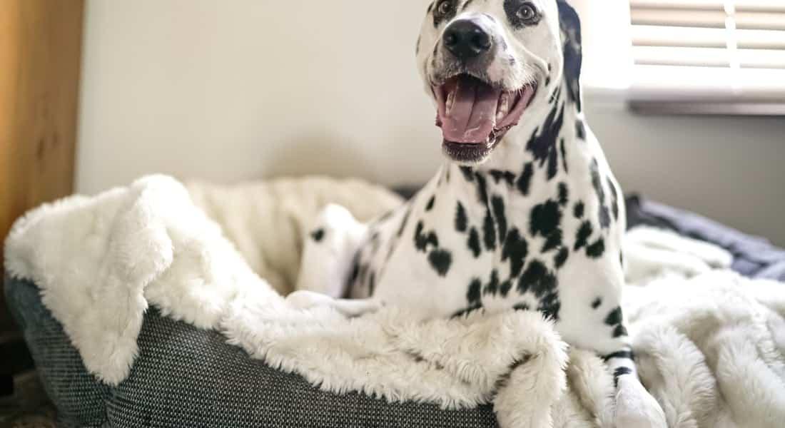colchones para perros grandes baratos