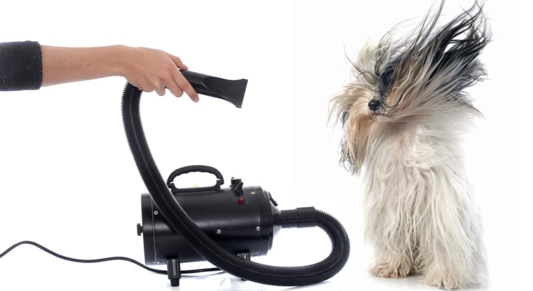 secador de pelo para perros