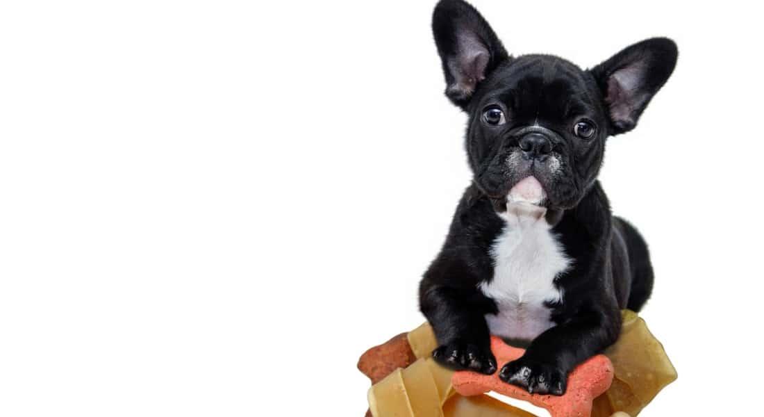 comederos para perros pequeños
