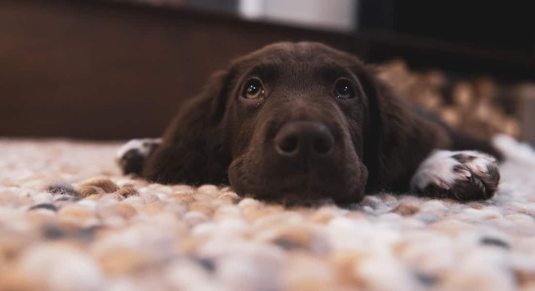juguetes inteligentes para perros
