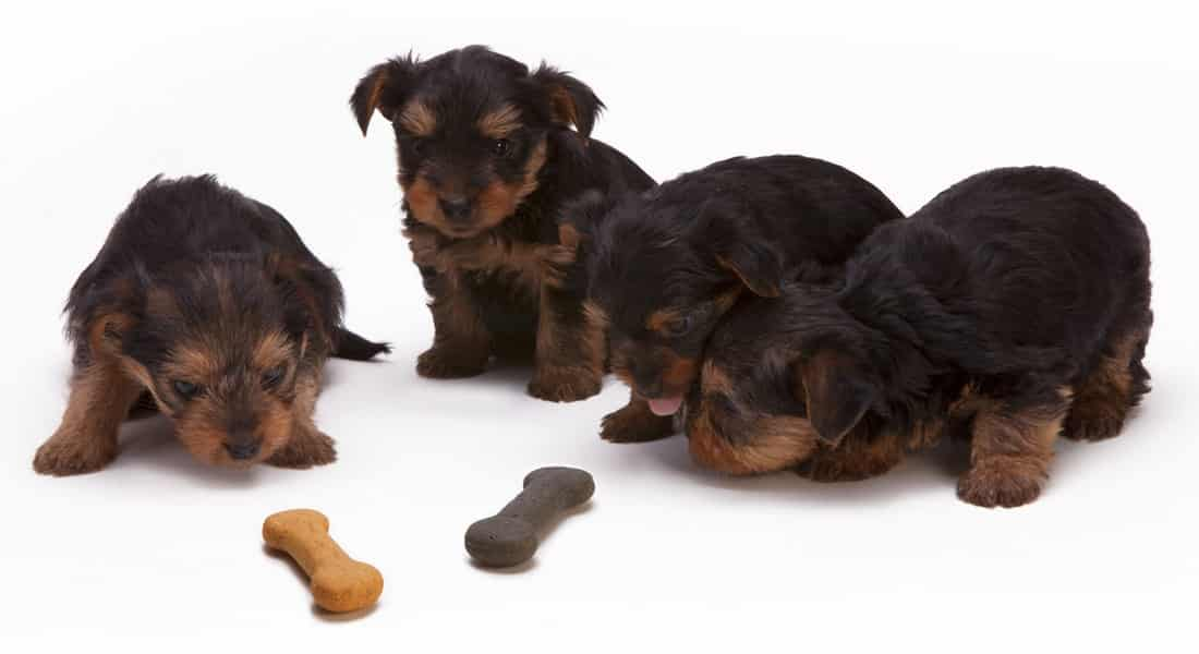 tipos premios de perros