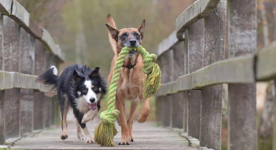 condroitin sulfato y glucosamina para perros