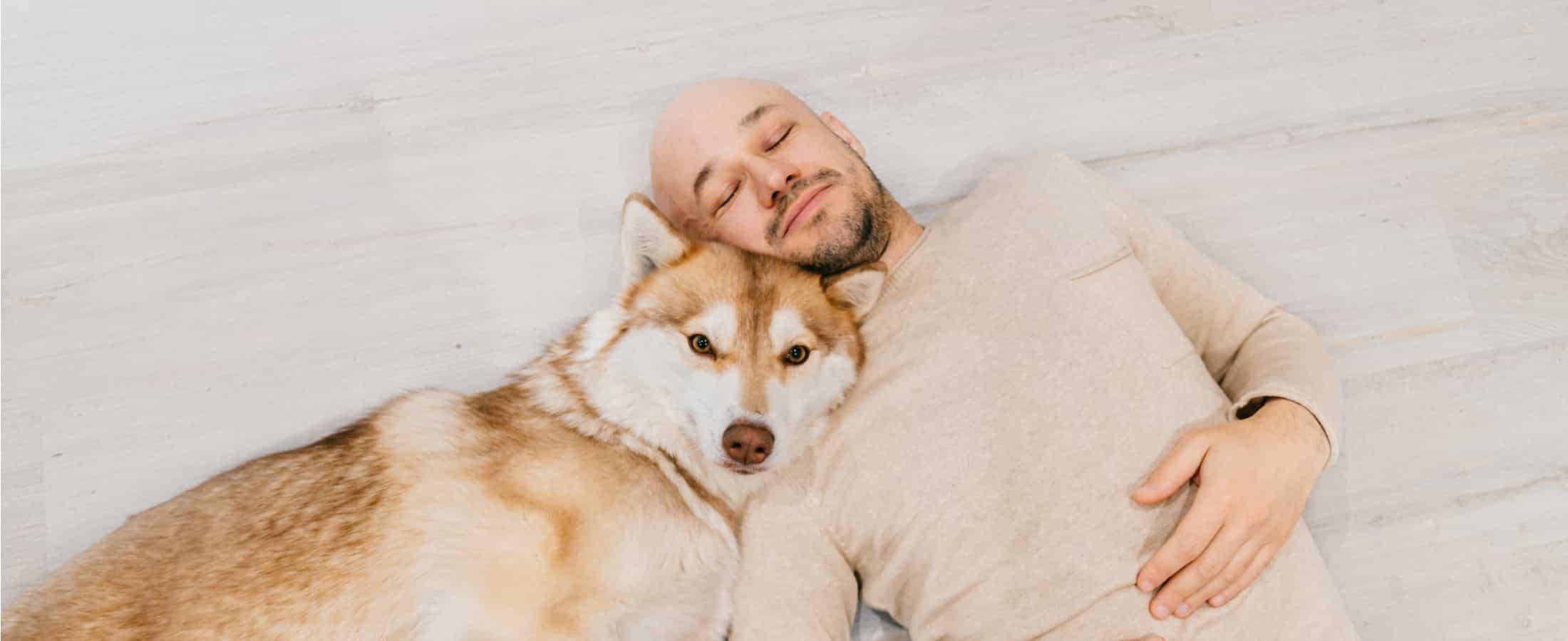 decaninos el mejor blog de perros
