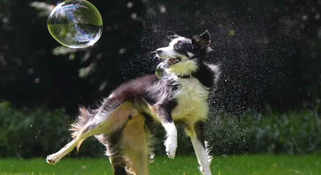 dosis de glucosamina y condroitina en perros