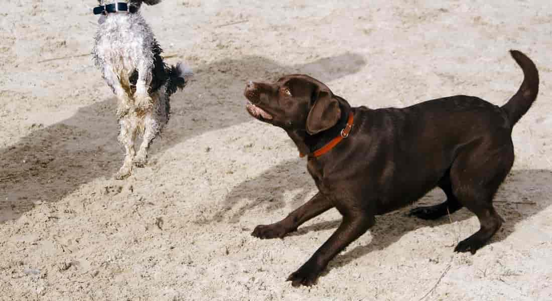 kong perros como funciona