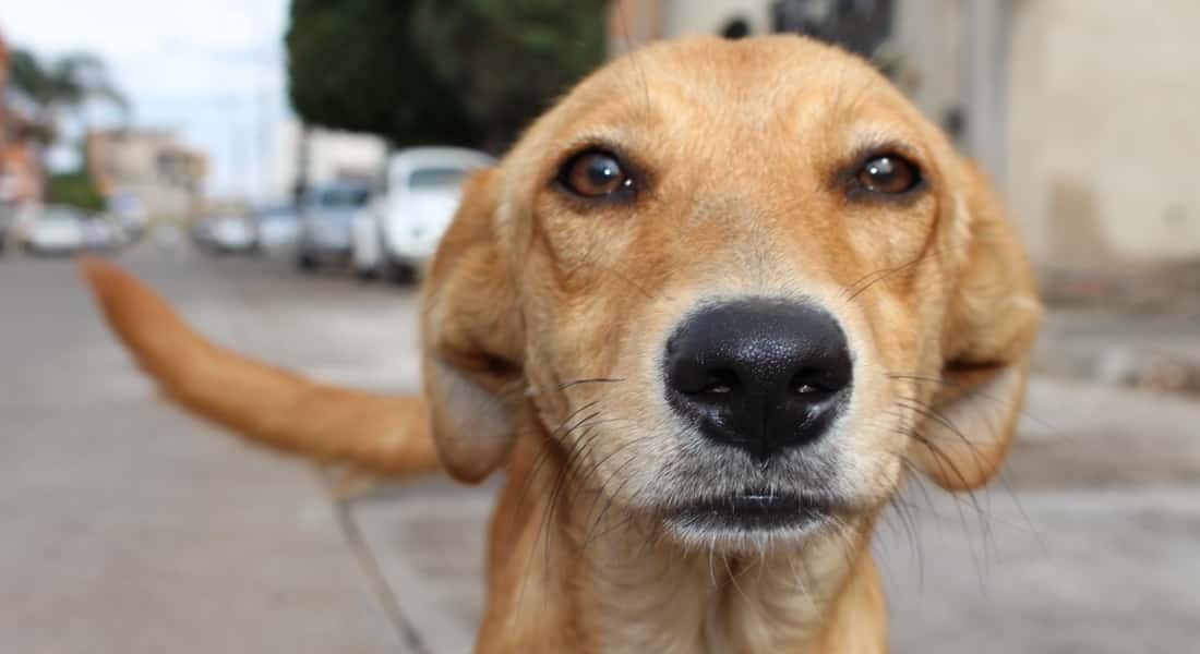 requisitos adopcion perros