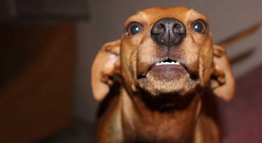 Cómo enseñar a no morder a un cachorro