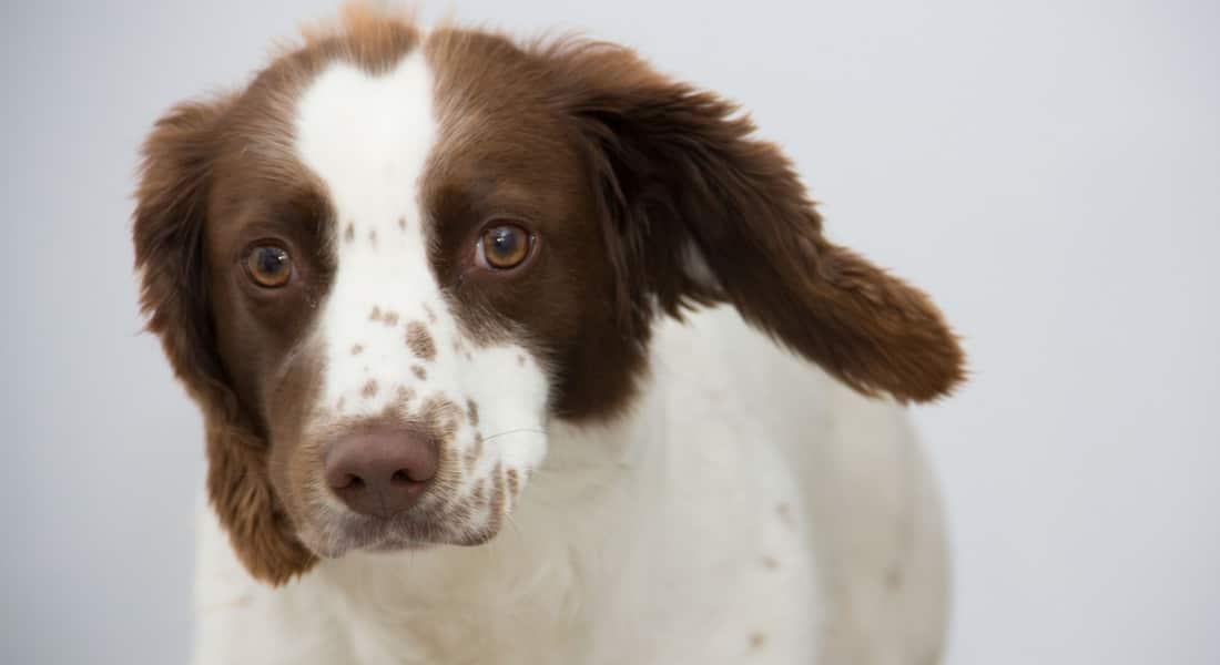 productos para limpieza de oídos en perros
