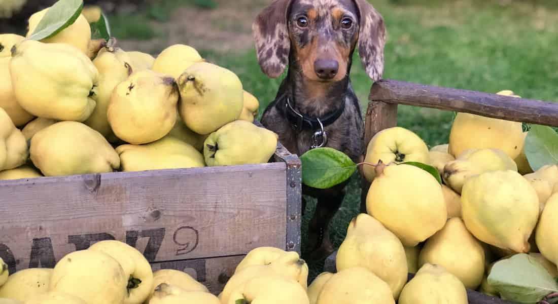 vitaminas para el pelo de los perros