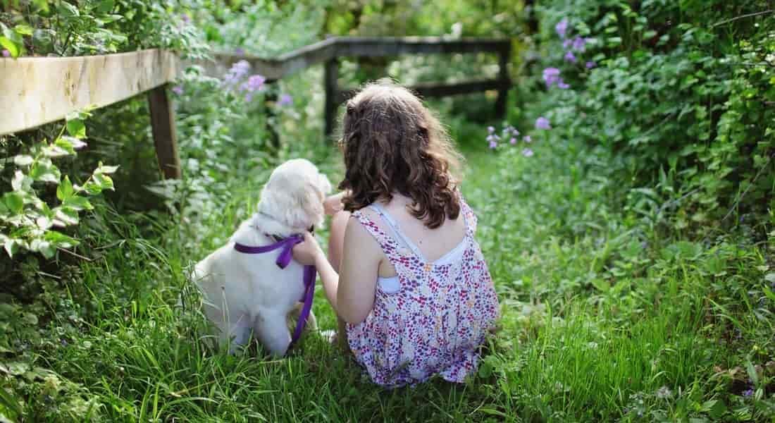 Aprender a cuidar perro