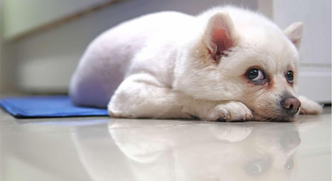 Manta Refrigerante para Perros